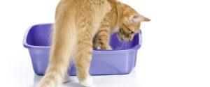 proteinuria gatto-malattia renale-esame urine
